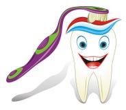Gesunder molarer Zahn mit Zahnbürste und toothpast Lizenzfreies Stockbild