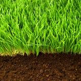 Gesundes Gras und Boden Lizenzfreie Stockbilder