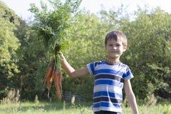 Gesundes organisches Gemüse für Kinder Junge, der eine Karotte in seinen Händen hält outdoor Sommergartenhintergrund Lizenzfreies Stockfoto