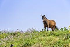 Gesundes Pferd auf einem Hügel Stockfotos