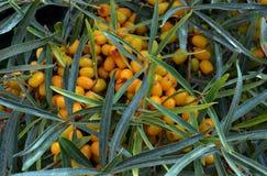 Gesundes rotes Gemüselebensmittel VE gelbe der Naturlandwirtschaftsgartenpeperoni der Beere der Baumherbstkarotte vegetarische wü Lizenzfreie Stockbilder