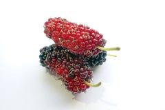 Gesundheit und Nutzen der Maulbeerfrucht stockbild