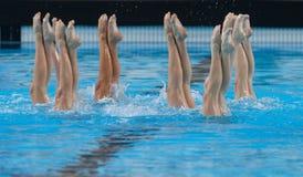 Gesynchroniseerd zwemmend tentoongesteld voorwerp 007 Royalty-vrije Stock Afbeeldingen