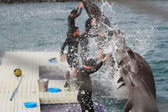 Gesynchroniseerde Dolfijnen Stock Foto's