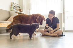 Get along with cats and dogs and girls. Indoor shooting royalty free stock photography