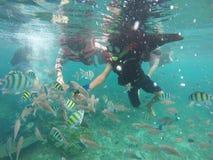 Get bekantade med fisken som bebor korallrever royaltyfria bilder