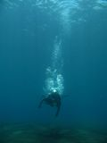 Get dive. A diver starting to get dive and still descending royalty free stock photo
