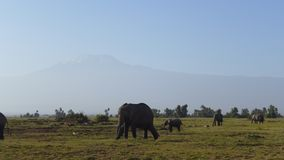 Amboseli national park, next to MT. Kilimanjaro. Get a great view of Mt. Kilimanjaro, and variety of wild animals.Elephants, wildebeest, etc Stock Photos
