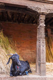 Get i Bhaktapur Arkivbild