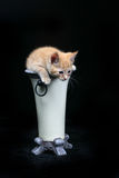 Get me out of here!. Kitten climbing out of a vase Royalty Free Stock Photography