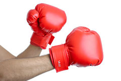 Get ready for a fight Royalty Free Stock Photography