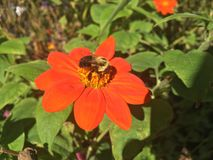 Bee on a leaf and we are near fall. Get some honey man Royalty Free Stock Photography