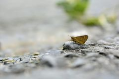 Get yellow dot butterfly in water Stock Images