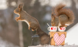 Get you some more. Close up of red squirrels standing in snow at a table a chair with cup with hearts Stock Photos