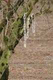 Getaggede Obstbäume Lizenzfreies Stockbild