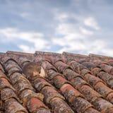 Getarnte Hasen auf Hausdach Stockfotografie