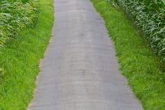 Geteerter landwirtschaftlicher Weg innerhalb der Felder von Zuckermaisanlagen Stockfotos