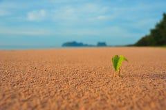 Getfotgrodd på stranden Royaltyfria Foton