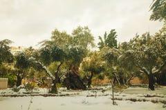 Gethsemane trädgård i Jerusalem fotografering för bildbyråer