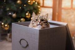 Getigerte Katze und glückliche Katze Weihnachtsjahreszeit 2017, neues Jahr Stockfotos