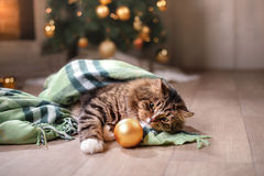Getigerte Katze und glückliche Katze Weihnachtsjahreszeit 2017, neues Jahr, Feiertage und Feier Lizenzfreies Stockfoto