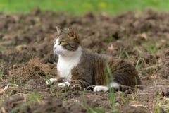 Getigerte Katze und weiße Katze Lizenzfreie Stockfotografie
