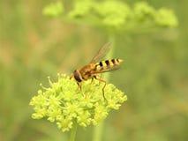 Geting för fotografi för naturkrypmakro royaltyfri fotografi