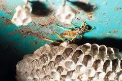 Getingar och honungskaka Royaltyfria Bilder