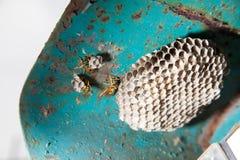 Getingar och honungskaka Royaltyfri Foto