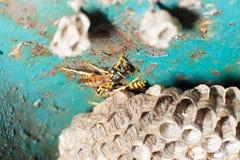 Getingar och honungskaka Royaltyfri Fotografi