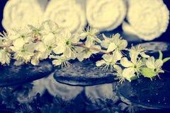 Getonter Badekurorthintergrund von Zensteinen, blühende Zweigpflaume mit refl Stockfoto