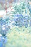 Getonter Blumenhintergrund mit Vergissmeinnichten und blauen Pansies Lizenzfreies Stockfoto