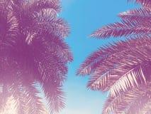 Getontes Bild im Retrostil Blätter von KokosnussPalmen lizenzfreies stockfoto