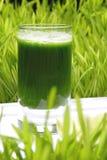 Getränk, Weizen frisch Stockbild