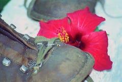 Getrampelte Blume stockbilder