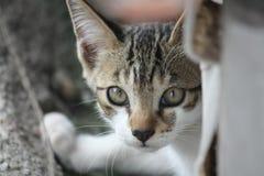 Getrampelte Katze in der Straße Lizenzfreies Stockfoto