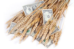 Getreide Stockbild