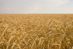 Getreide-Anlage Stockbild