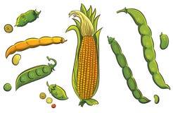 Getreide-Ansammlung Lizenzfreie Stockbilder