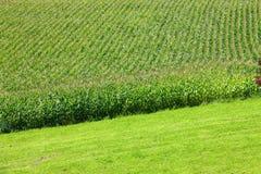 Getreide auf dem Ackerland Lizenzfreie Stockbilder