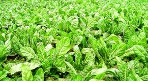 Getreide auf dem Land Lizenzfreie Stockfotos