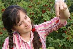 Getreide einer roten Johannisbeere Lizenzfreie Stockbilder