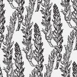 Getreide erntet Skizzen Lizenzfreie Stockfotos