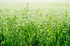 Getreide-Getreide Lizenzfreie Stockfotografie