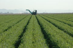 Getreide-Reihen und landwirtschaftliche Maschine Stockfotos