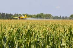 Getreide-Staubtuch Lizenzfreie Stockfotos