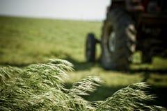 Getreide-Stiele, die auf dem Gebiet durchbrennen Stockfoto