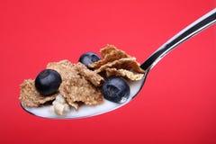 Getreide und Blaubeeren auf Löffel Lizenzfreies Stockbild