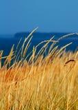 Getreide und Himmel Lizenzfreie Stockbilder