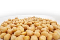 Getreideanlage Lizenzfreies Stockfoto